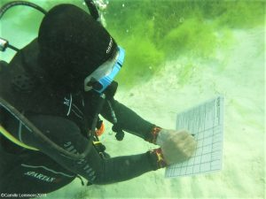 PADI IDC Staff Instructor course at Thresher Cove
